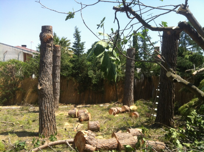 tala arboles zaragoza soler y romero jardineria
