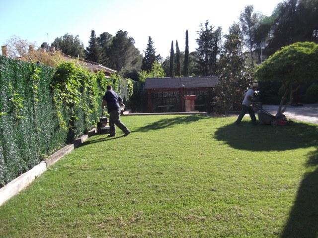escarificando jardin mantenimiento