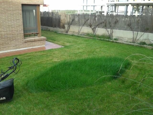 Mantenimiento jardines zaragoza 26 soler y romero jardineria for Jardin zaragoza