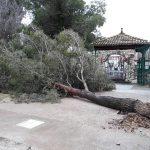 ARBOL CAIDO EN CENTRO DE MAYORES